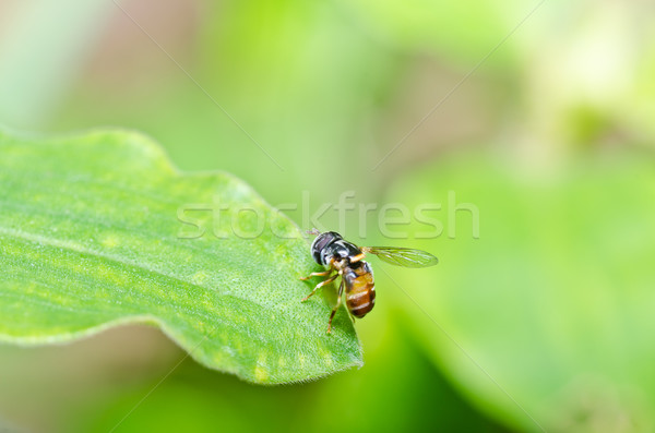 Flower files or Fruit files or Hover files in green nature Stock photo © sweetcrisis