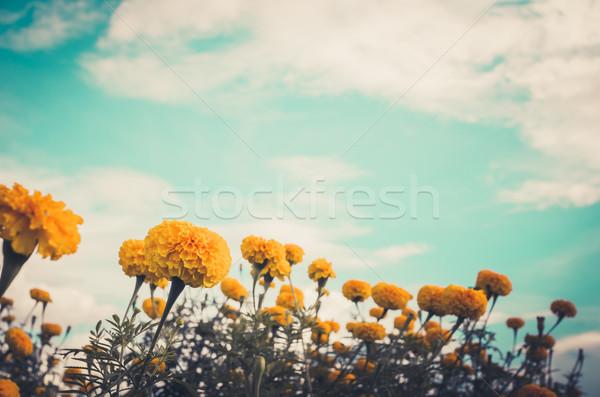 цветок Vintage природы саду свадьба голову Сток-фото © sweetcrisis