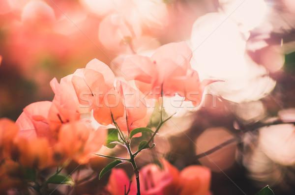 ストックフォト: 紙 · 花 · ヴィンテージ · 庭園 · 自然 · 公園