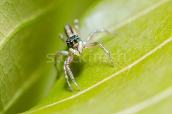 クモ 緑 自然 マクロ ショット 恐怖 ストックフォト © sweetcrisis