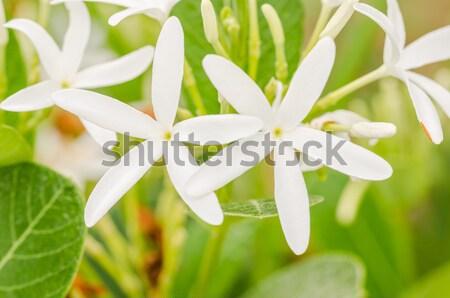 White flower vintage Stock photo © sweetcrisis