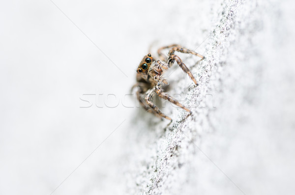 Spider in wall nature background Stock photo © sweetcrisis