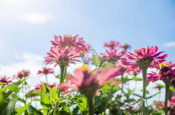 Flor blue sky jardim natureza parque feliz Foto stock © sweetcrisis