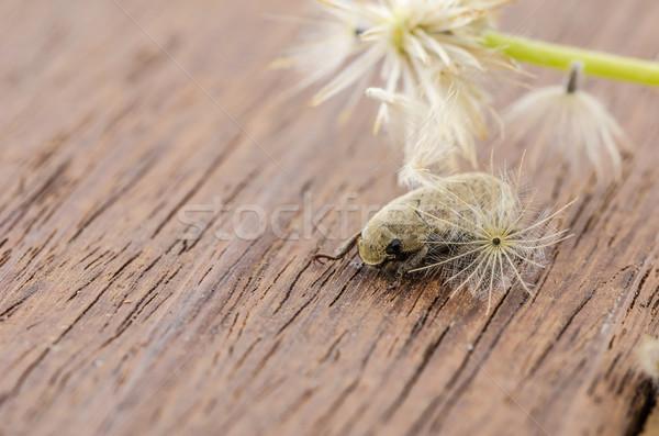 Marrom escaravelho besouro inseto madeira Foto stock © sweetcrisis