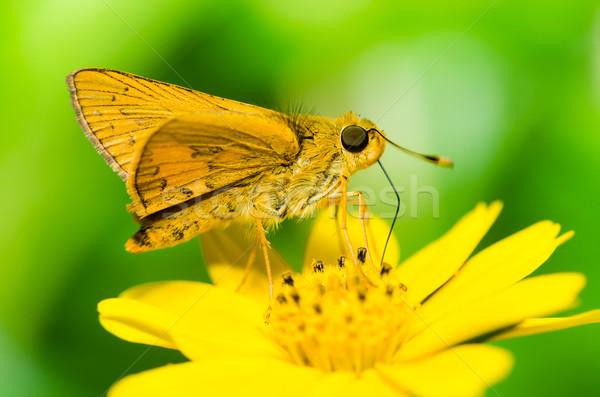 Stock fotó: Pillangó · makró · zöld · természet · kert · tavasz
