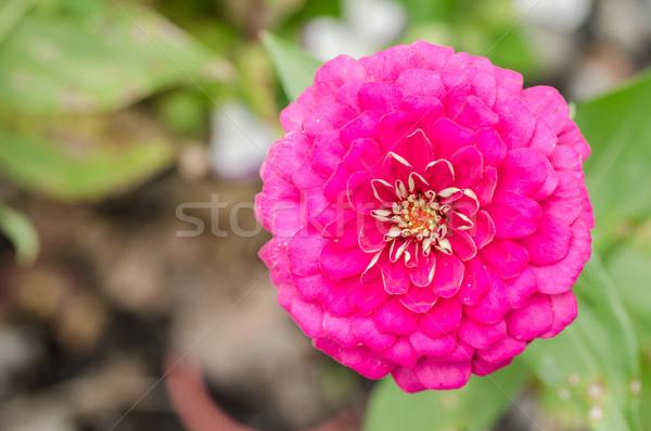 Flor verde jardim natureza parque feliz Foto stock © sweetcrisis