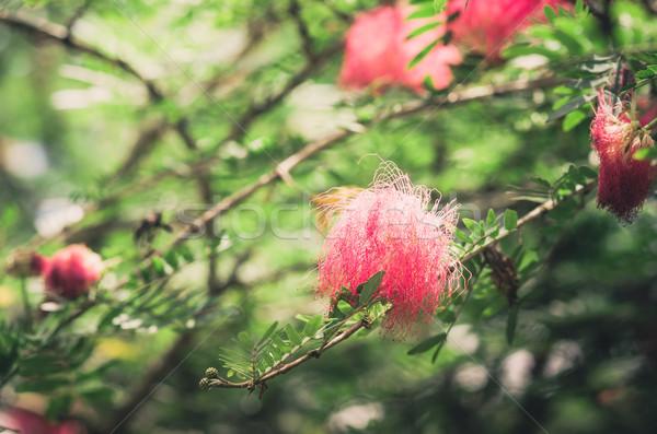 розовый цветок Vintage саду природы парка Таиланд Сток-фото © sweetcrisis