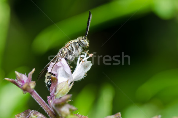 wasp in green nature Stock photo © sweetcrisis