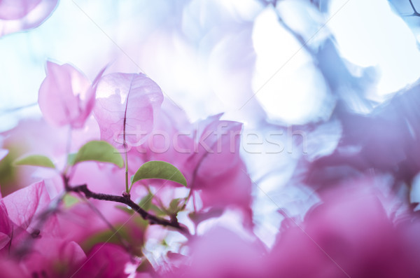 Papier fleurs vintage jardin nature parc Photo stock © sweetcrisis
