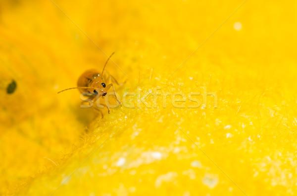 Narancs bogár zöld természet kert tavasz Stock fotó © sweetcrisis