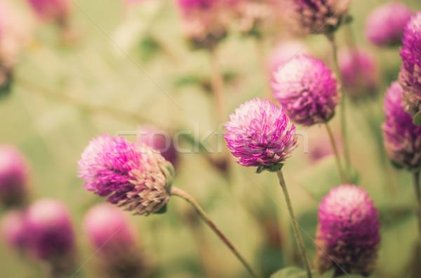 Welt Bachelor Taste Blume Jahrgang Makro Stock foto © sweetcrisis