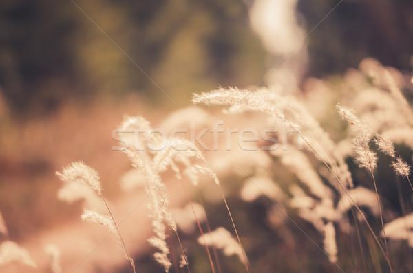 花 工場 ヴィンテージ 雑草 自然 庭園 ストックフォト © sweetcrisis