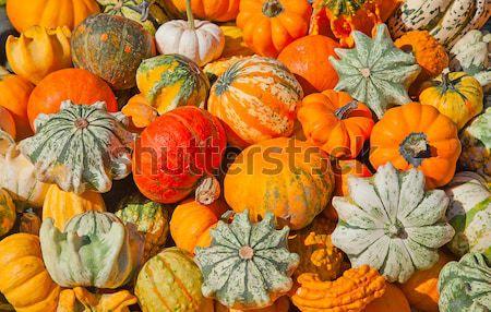 Renkli toplama sonbahar pazar renk Stok fotoğraf © swisshippo