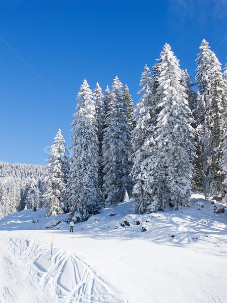 Kayakçılık başvurmak spor dağ Kayak Stok fotoğraf © swisshippo