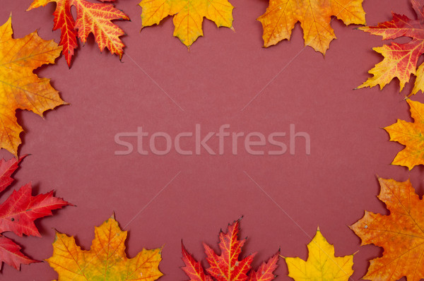 Claret background surrounded by autumn colorful fallen maple lea Stock photo © szabiphotography