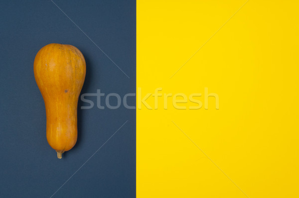 Butternut squash isolated on blue and yellow split background Stock photo © szabiphotography