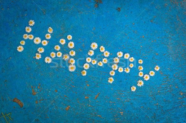 Słowo szczęśliwy napisany Daisy kwiaty niebieski Zdjęcia stock © szabiphotography