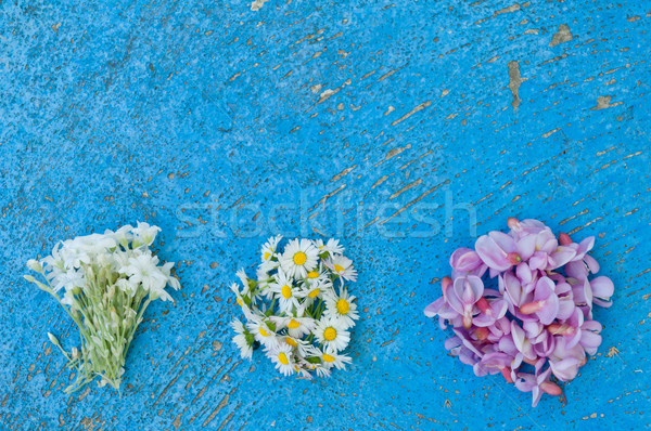 Small bunches of different flowers on an old textured light blue Stock photo © szabiphotography