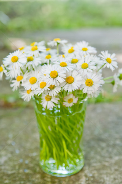 White daisy flowers in a glass blurred background Aster daisy Stock photo © szabiphotography