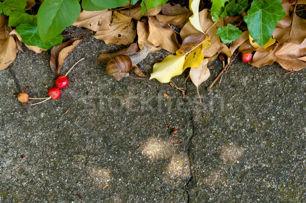 Konkretnych świeże suszy pozostawia wiśni ślimak Zdjęcia stock © szabiphotography