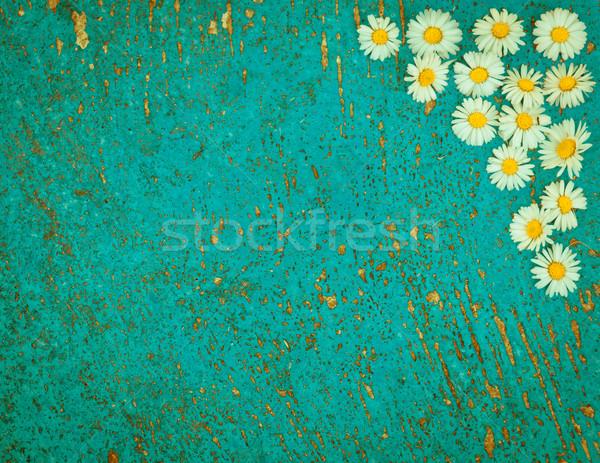 Jasnoniebieski starych Daisy kwiaty turkus Zdjęcia stock © szabiphotography
