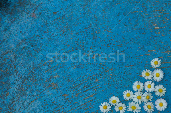 Light blue old textured background with daisy flowers turquoise  Stock photo © szabiphotography