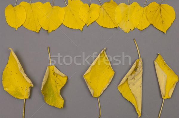 Jesienią żółty pozostawia szary wzór Zdjęcia stock © szabiphotography