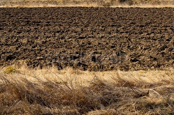 土壌 農業の フィールド 土地 黒 風景 ストックフォト © szabiphotography