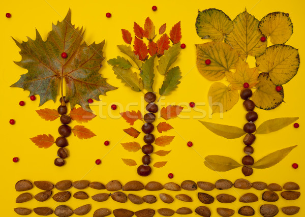 Autumn arrangement of fallen leaves, nuts and berries Stock photo © szabiphotography