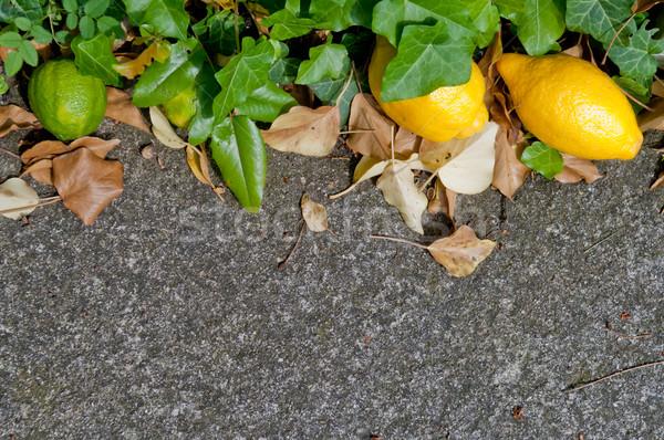 Surowy szary kamień tle pozostawia Zdjęcia stock © szabiphotography