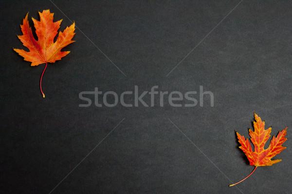 Sonbahar renkli akçaağaç yaprakları koyu gri bo Stok fotoğraf © szabiphotography