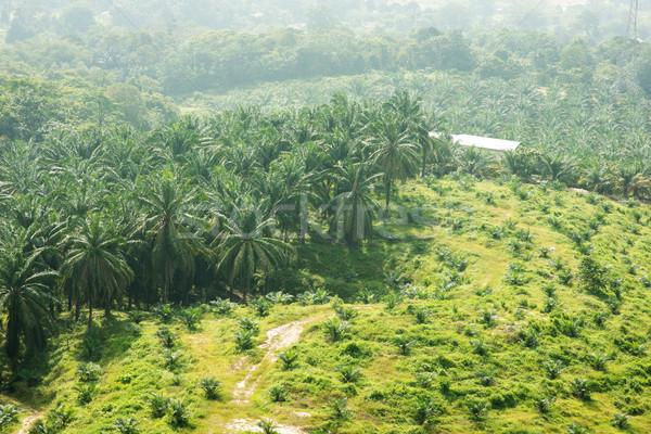 Palm oil plantation Stock photo © szefei
