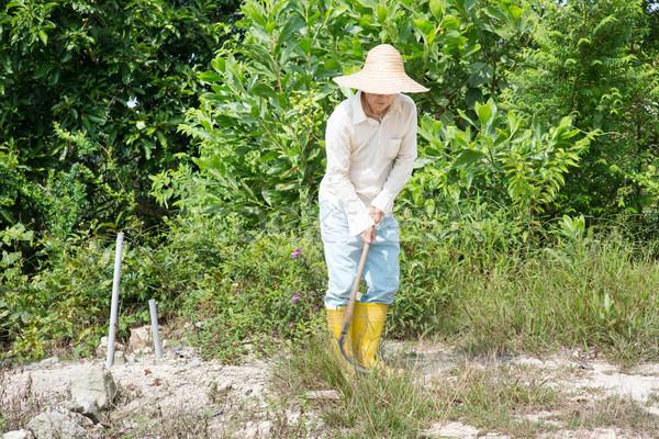 Starych asian rolnik gruntów czyszczenia strony Zdjęcia stock © szefei