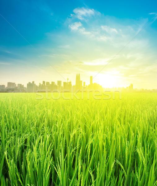 landscape view over rice field plantation farming Stock photo © szefei