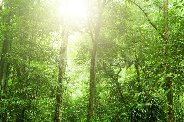 Tropical rain forest  Stock photo © szefei