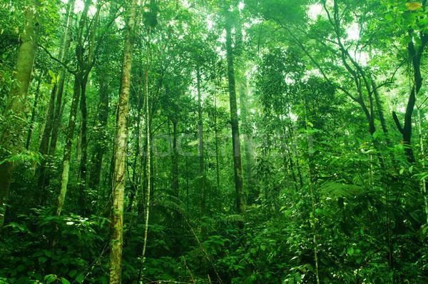 Trópusi sűrű erdő fantasztikus zöld tájkép Stock fotó © szefei