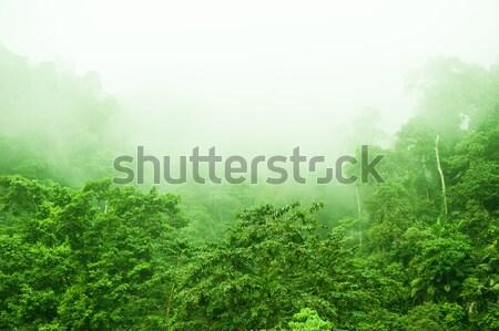 Forêt tropicale brumeux matin montagne gamme vue Photo stock © szefei