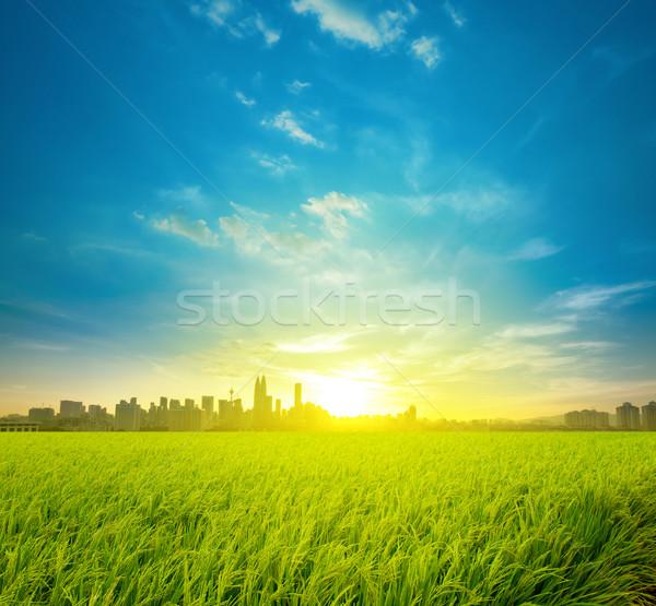 Rijstveld plantage stad Kuala Lumpur Maleisië landschap Stockfoto © szefei