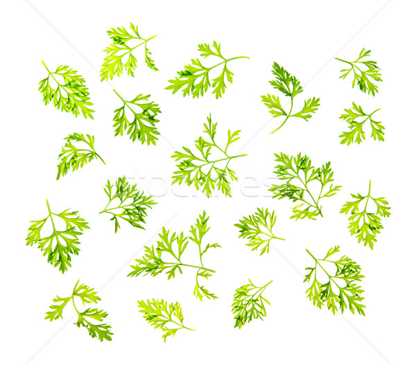 Dill leaves isolated Stock photo © szefei
