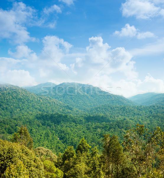 Trópusi erdő hegy kilátás zöld tájkép Stock fotó © szefei