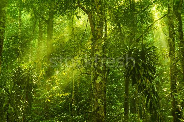 Green forest Stock photo © szefei