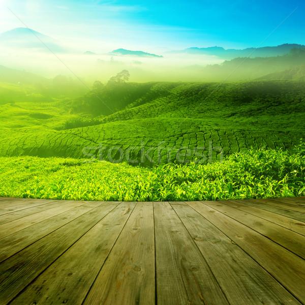 Tea field Stock photo © szefei