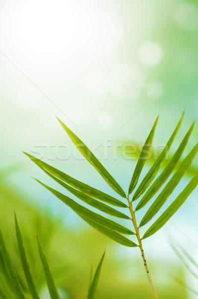 Bambu yaprakları bo üst ağaç Stok fotoğraf © szefei