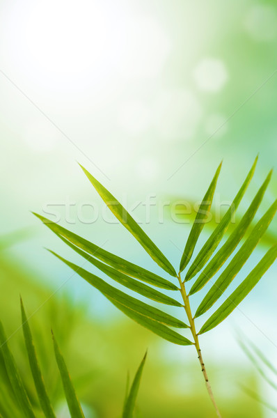 Bambu folhas cópia espaço topo árvore Foto stock © szefei