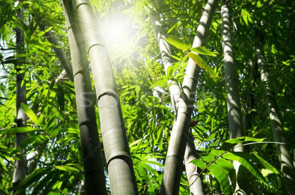 бамбук дерево пейзаж азиатских лес утра Сток-фото © szefei