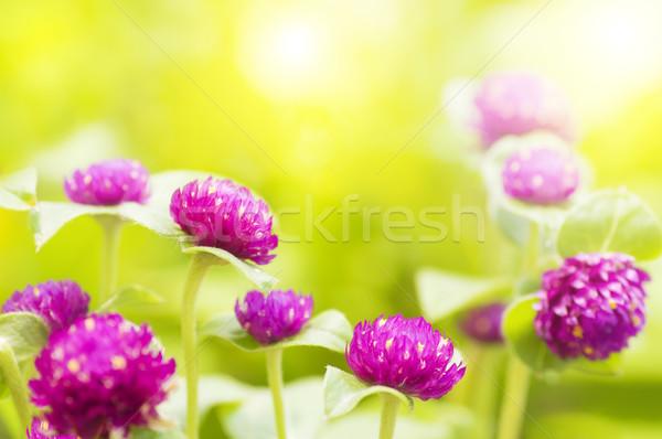 Garden view in morning. Stock photo © szefei