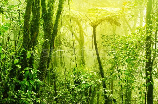 霧の 熱帯 緑 熱帯雨林 霧 霧 ストックフォト © szefei