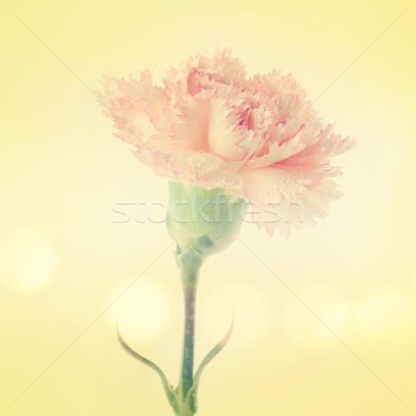 гвоздика цветок розовый Vintage дизайна Сток-фото © szefei