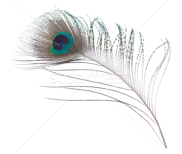 Paon plumes isolé blanche texture Photo stock © szefei