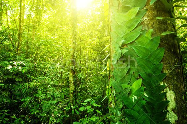Doğal tropikal orman fantastik orman manzara Stok fotoğraf © szefei